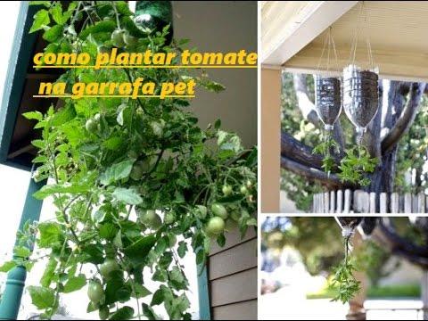 Como plantar tomate invertido youtube for Materiales para un vivero