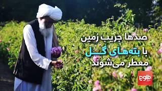 رونق روش دیرینۀ جمعآوری گلهای معطر برای صنایع عطرسازی در افغانستان