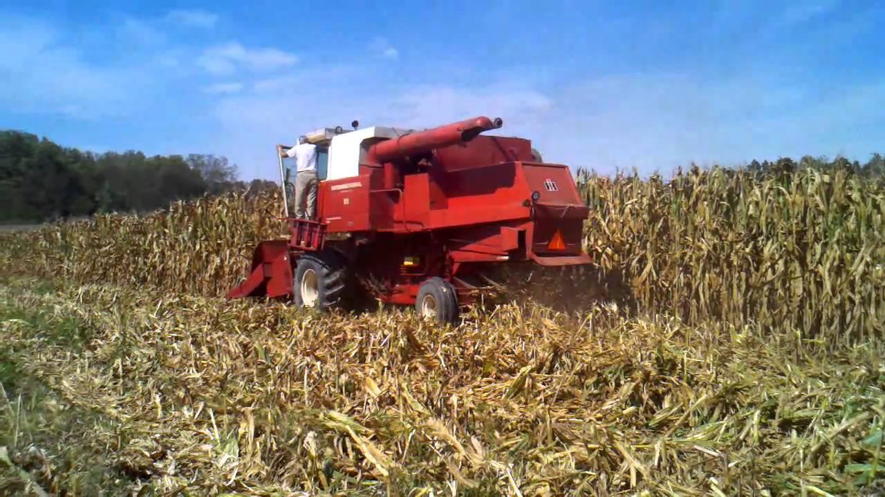 corn harvest 2010 dekalb 4352 2 ih 815 [ 1280 x 720 Pixel ]