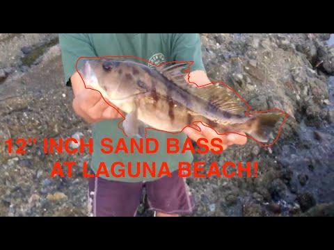 Seceret Fishing Spot! At Laguna Beach! 2019