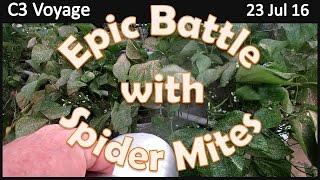 Epic Battle With Spider Mites