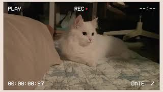 군인관사 고양이 일상 | cat vlog | 반려묘 |…