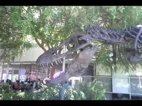 T-Rex STAN @ Google