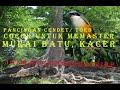 Cendet Dahsyat Isian Tembakan Masteran Terbaik Untuk Mengisi Isian Murai Batu Dan Kacer  Mp3 - Mp4 Download