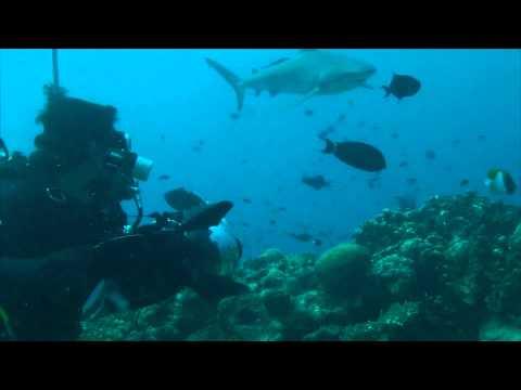 Bismark Sea Sharks 3