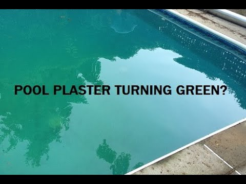 Why is my pool plaster turning green?