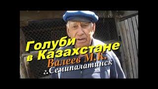 Голуби   ВАЛЕЕВА М.К.  г.Семипалатинск 2017