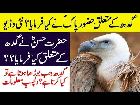 Hidden And Interesting Facts About Vultures in Hindi/Urdu || Facts About Vulture Birds!