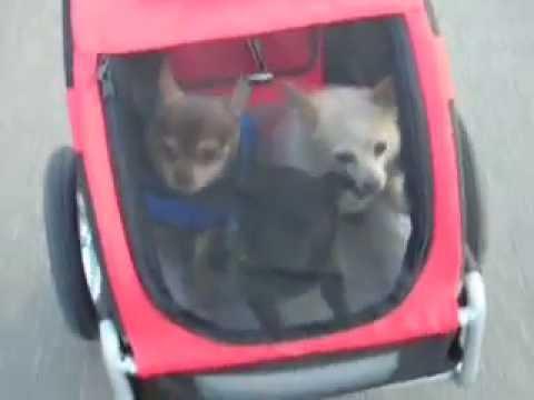 doggyride mini dog bike trailer