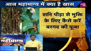 बरगद का पेड़ कैसे दूर करेगा समस्याएं ?   Mahabhagya   Pt. Shailendra Pandey  Astro Tak