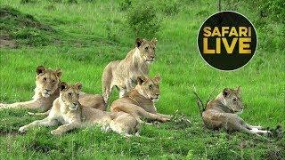 safariLIVES: Episode 29
