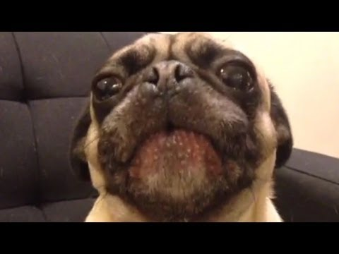 The Best Dog Vines of 2013