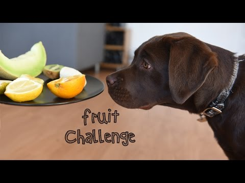 Puppy Lab & The Fruit Challenge