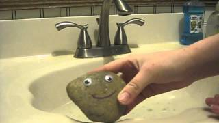 Popular Videos - Pet Rock & Animals