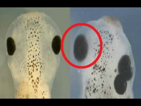 12 Weirdest Genetic Scientific Experiments