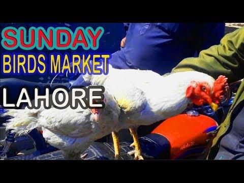 WEEKLY REPORT OF SUNDAY BIRDS MARKET LAHORE SHALIMAR GARDEN | URDU/HINDI