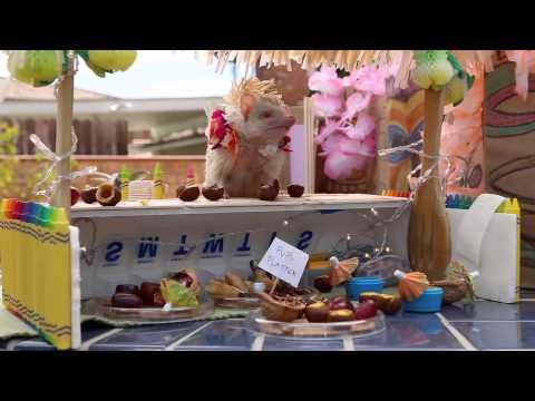 Behind the Scenes: Tiny Hamster's Tiny Tiki Party
