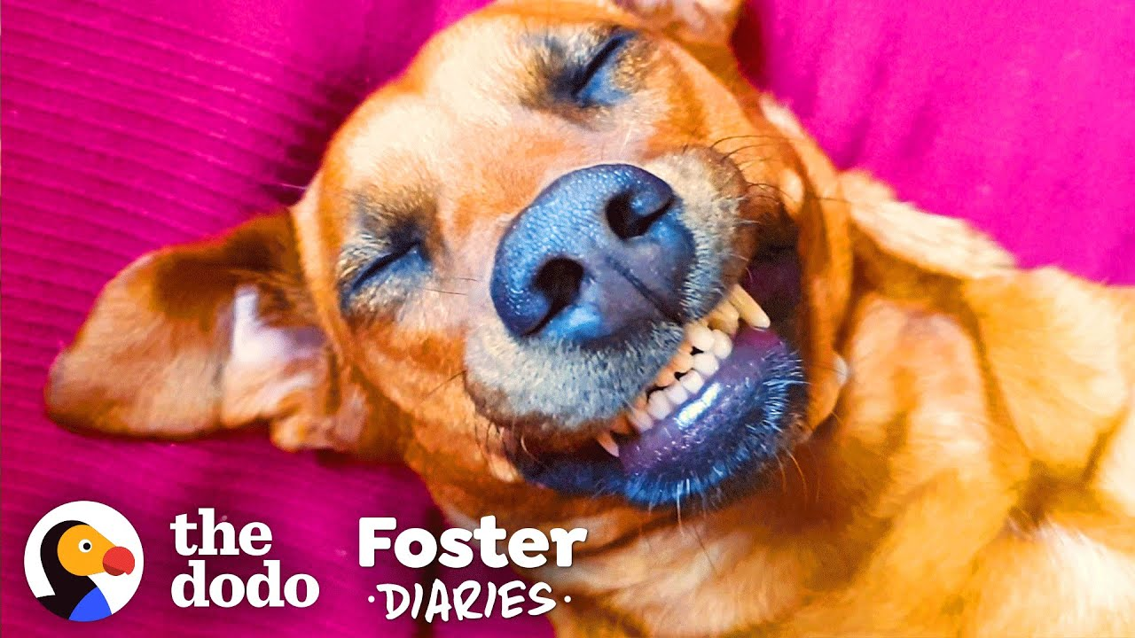 Scared Street Dog Meets Her Foster Mom — And Gets A Big Surprise  | The Dodo Foster Diaries