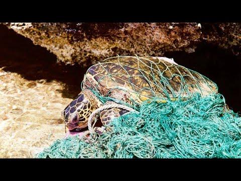 How ocean plastic threatens sea turtles