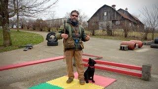 Labrador Retriever Puppy Training  12 Weeks