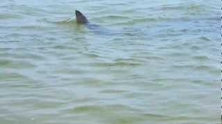 Shark sighting 1