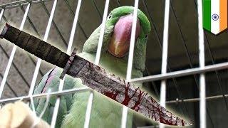 Попугай помог поймать убийц своей хозяйки