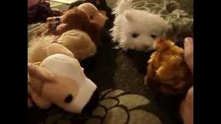 Приключения щенков и котят. Серия 1