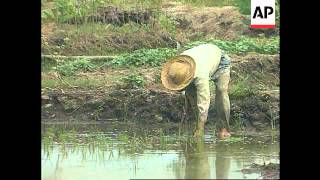 Indonesia - Peat development project