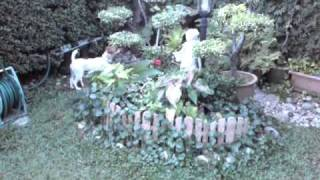 Spot The Jack Russell Terrier
