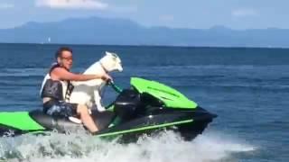 琵琶湖にて初ジェットのホワイトスイスシェパード.