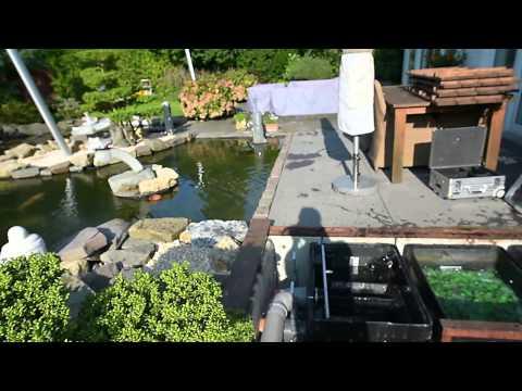 Modern koi blog 430 zu viel frischwasser und zu viel for Teich salz gegen algen