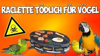 Raclette tödlich für Sittiche und Papageien!! Warnung vor schädlicher Antihaftbeschichtung!!