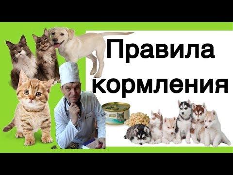 КОРМЛЕНИЕ СОБАК И КОШЕК /// Правила питания. Виды питания.