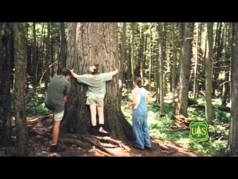 Silviculturist in the US Forest Service, Shasta-Trinity National Forest