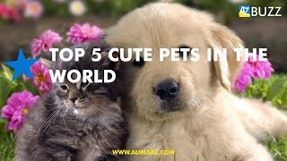Top 5 Cute Pets Around the World #Top5 #Cutepets #Top5cutepets #Top5animals