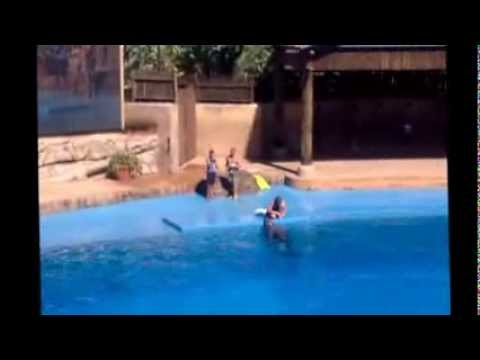 Dolphin Show   Ushaka Marine World   Durban   SAR