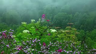 Скачать Звук дождя с пением тибетских чаш и чириканьем птиц Rain Sounds With Tibetan Singing Bowls And Bird