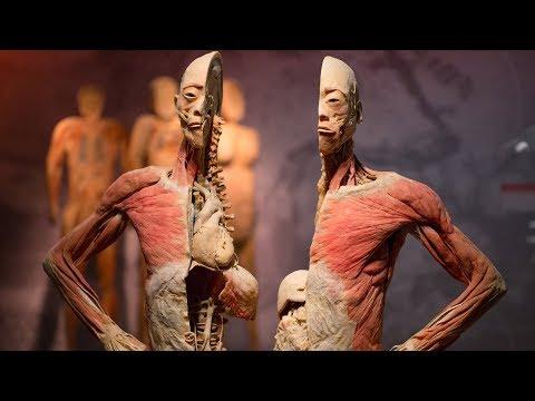 ١٠ حقائق مذهلة عن جسم الإنسان