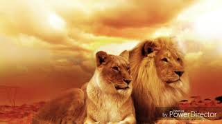My favourite animals