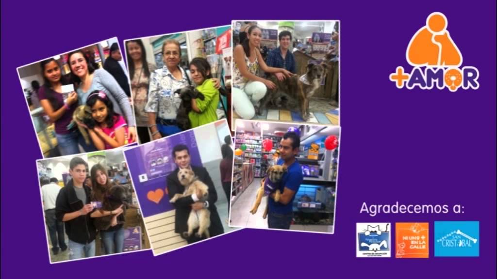 Fines de Semana de Adopción +KOTA (Tiendas Maskota)