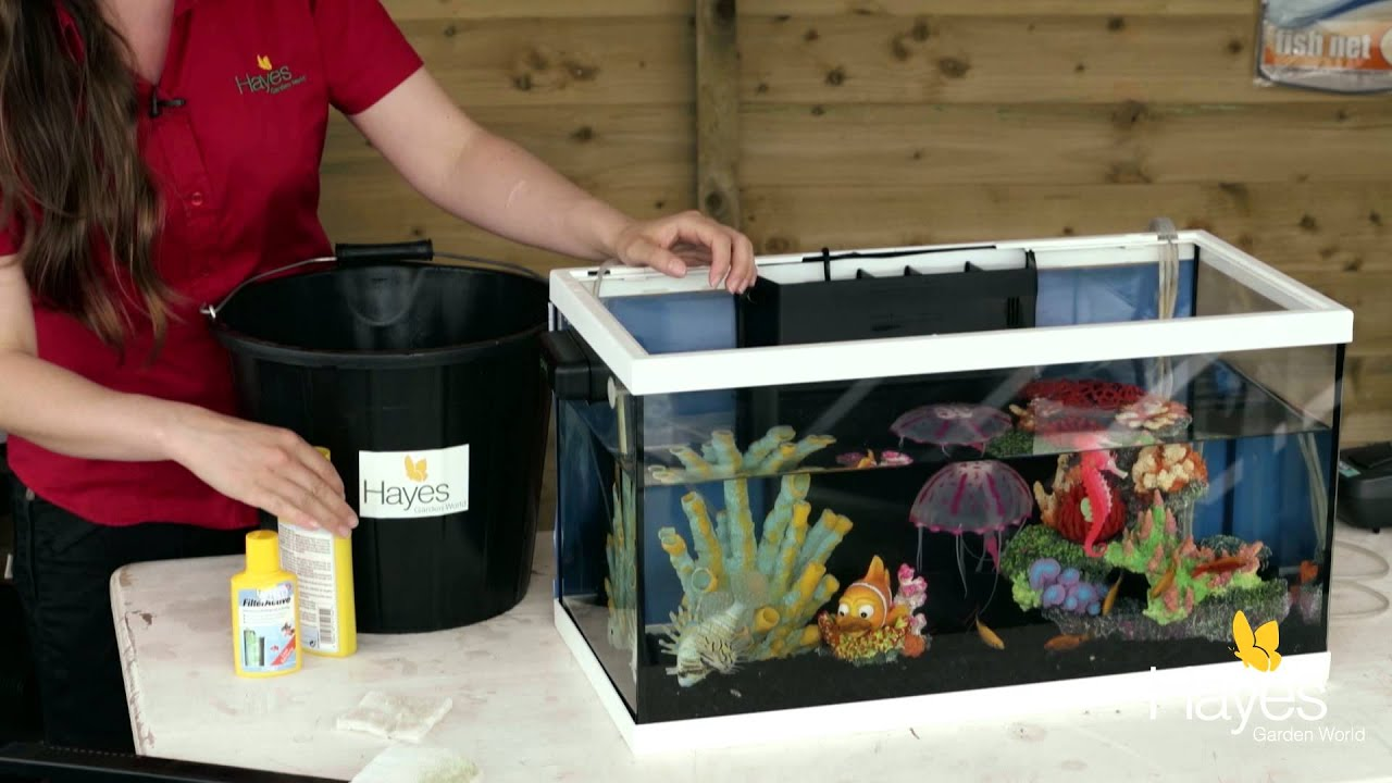 Fish aquarium how to maintain - How To Maintain Your Fish Tank Hayes Garden World