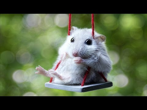 Cute Mouse Videos - Funny Mice Compilation NEW