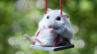 たまにはネズミを愛でてみよう。これぞ小動物!という仕草とサイズが可愛かった件