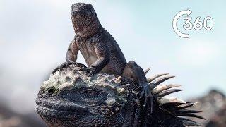 Iguana vs Snakes 360° - Planet Earth II - Behind the Scenes thumbnail