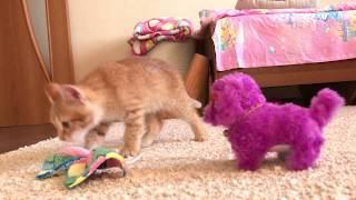 Маша и её новый друг Котёнок Симка. Знакомство с собачкой Чаки