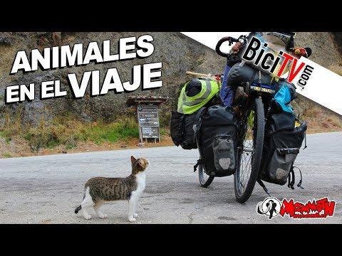 Biciclown. Animales en el viaje. La vuelta...