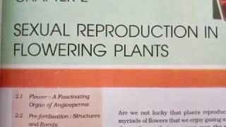 Sexual reproduction in flowering plants. Helpful for NEET, CSIR, class 12 and University students.