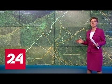 """""""Погода 24"""": ДТП в Ленинградской области"""