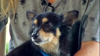 Dona reencontra cão desaparecido após seis anos de buscas thumbnail