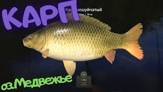 Русская рыбалка 4 РР4 о Медвежье КАРП
